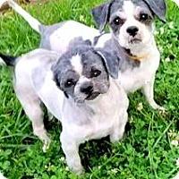 Adopt A Pet :: RENINY & ROLO(A SAD SAD STORY! - Wakefield, RI