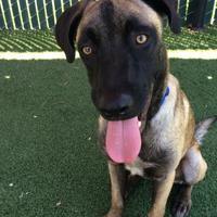 Adopt A Pet :: Little Jebby Rathe - Sacramento, CA