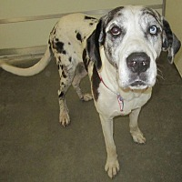 Adopt A Pet :: Duke - Holton, KS