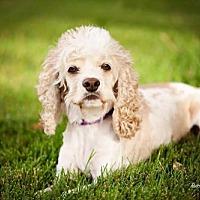 Adopt A Pet :: Dyna Doll - Salt Lake City, UT