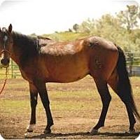 Adopt A Pet :: Jack - Durango, CO