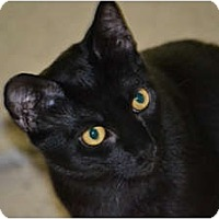 Adopt A Pet :: Cisco Kid - Laguna Woods, CA