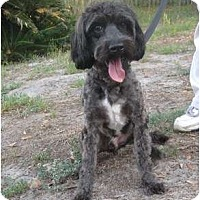 Adopt A Pet :: Bruce - Jacksonville, FL