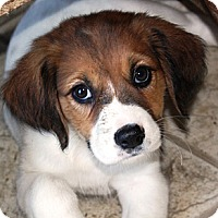 Adopt A Pet :: Ethan - PENDING, in Maine - kennebunkport, ME