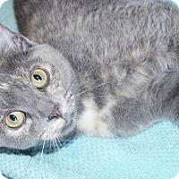 Adopt A Pet :: Delilah - Xenia, OH