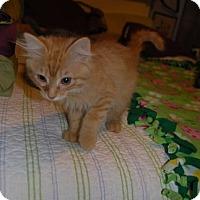 Adopt A Pet :: Harry Pawter - Bentonville, AR