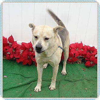 Husky Mix Dog for adoption in Marietta, Georgia - SMOKEY - reclaimed