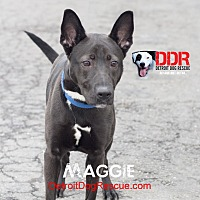 Shepherd (Unknown Type) Mix Dog for adoption in St. Clair Shores, Michigan - Maggie