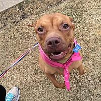 Adopt A Pet :: Rosie - Covington, TN