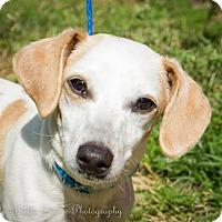 Adopt A Pet :: Jo Jo - Daleville, AL