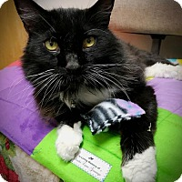 Adopt A Pet :: Nimble - Negaunee, MI