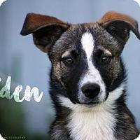 Adopt A Pet :: Raiden - Joliet, IL