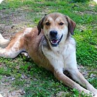 Adopt A Pet :: Rosey - Brownsboro, AL