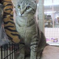 Adopt A Pet :: Sundae - Westville, IN