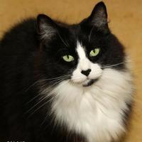 Adopt A Pet :: Josie - Bridgewater, NS