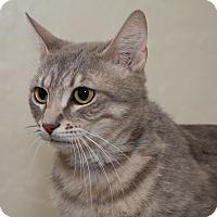 Adopt A Pet :: Julep - Fountain Hills, AZ