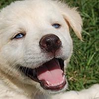 Adopt A Pet :: LILO - Lebanon, TN