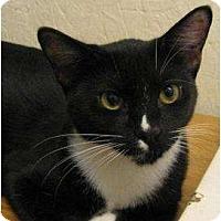 Adopt A Pet :: Dixie - Metairie, LA