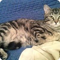 Adopt A Pet :: Karmel - Colorado Springs, CO