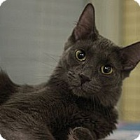 Adopt A Pet :: Claire - Mission, BC