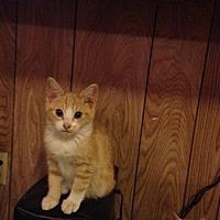Adopt A Pet :: Dakota - Baton Rouge, LA