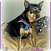 Adopt A Pet :: Delilah - Sacramento, CA