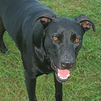 Adopt A Pet :: Dillion - Nashville, GA