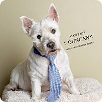 Adopt A Pet :: Duncan-Pending Adoption - Omaha, NE