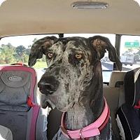 Adopt A Pet :: Daisy - Jupiter, FL