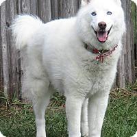 Adopt A Pet :: HUTCH - Jacksonville, FL