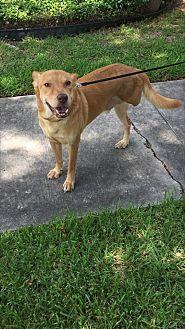Labrador Retriever Mix Dog for adoption in Brattleboro, Vermont - Jake