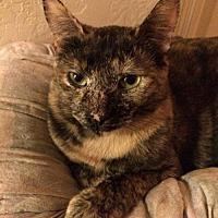 Adopt A Pet :: Nutmeg - San Tan Valley, AZ