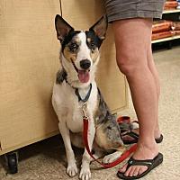 Adopt A Pet :: Ryder - Rochester, MN