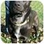 Photo 2 - Labrador Retriever Mix Dog for adoption in Greensburg, Pennsylvania - Sammy