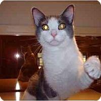 Adopt A Pet :: Lucky - Fremont, MI