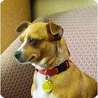 Adopt A Pet :: Dawnee - YERINGTON, NV