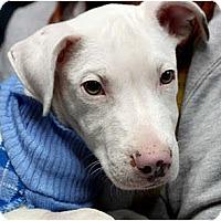 Adopt A Pet :: Vegas - Rowlett, TX
