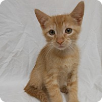 Adopt A Pet :: Fred Weasley - Maywood, NJ