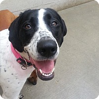 Adopt A Pet :: Lucky*ADOPTED!* - Chicago, IL