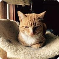 Adopt A Pet :: Rusty - Delmont, PA