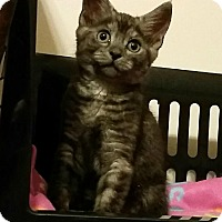Adopt A Pet :: Zumi - Chesapeake, VA