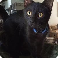 Adopt A Pet :: Tony - Cocoa, FL