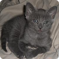 Adopt A Pet :: potter - brewerton, NY
