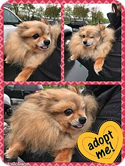 Adopt A Pet :: Berry  - Renton, WA