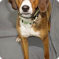 Adopt A Pet :: Nicholas - Waynesboro, PA