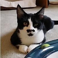 Adopt A Pet :: PeeWee - Woodland Hills, CA
