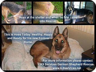 German Shepherd Dog Dog for adoption in Green Cove Springs, Florida - Hoss