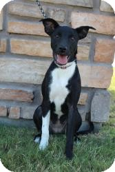 Cattle Dog/Catahoula Leopard Dog Mix Puppy for adoption in justin, Texas - Little Bit