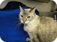 Domestic Mediumhair Cat for adoption in Brea, California - RITA