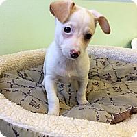 Adopt A Pet :: Jo-Dee - New York, NY